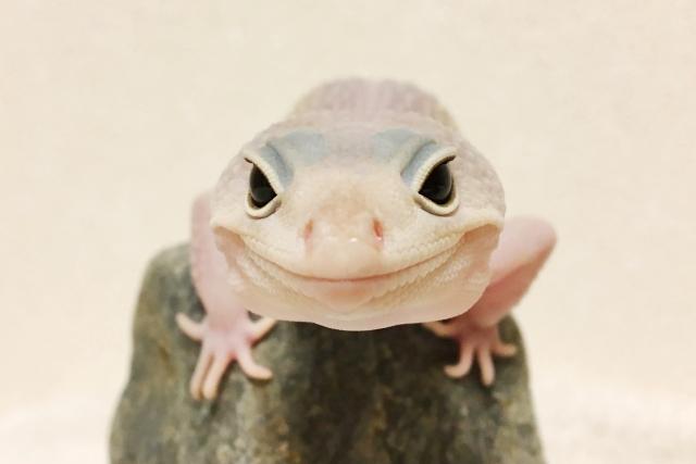 イベント 大阪 爬虫類